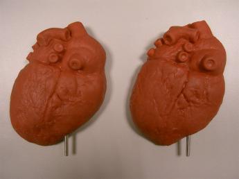 Анатомическая модель сердца Фото 1